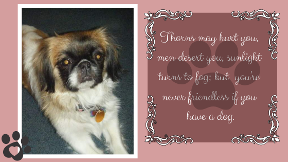 Thorns may hurt you, men desert you, sunlight turns to fog; but you're never friendless if you have a dog.