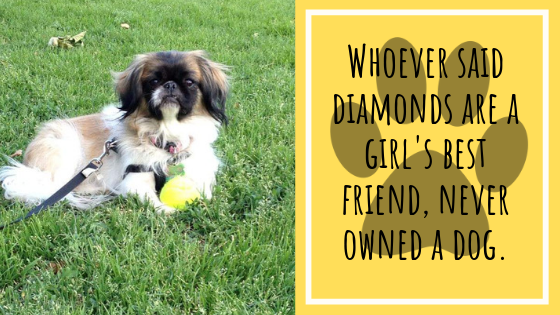 Whoever said diamonds are a girl's best friend, never owned a dog.