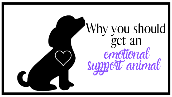 Why you should get an Emotional SupportAnimal
